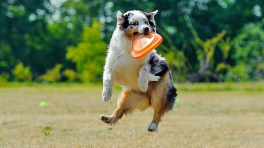 В Аргентине пес отнял мяч у футболистов и вволю наигрался с ним