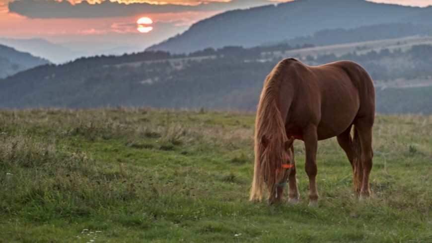 25 лет вместе: лошади научили бизнесмена из Беларуси искусству диалога