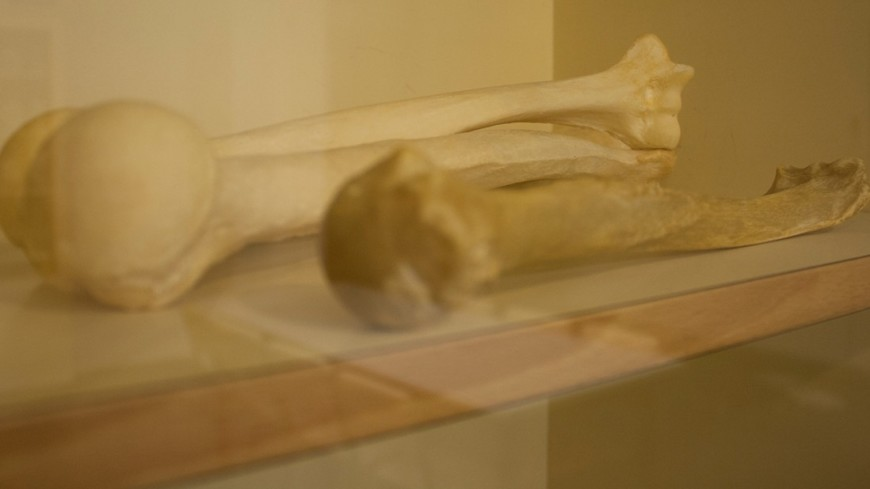 Ученые узнали, что неандертальцы развивались медленнее актуальных насегодняшний день людей