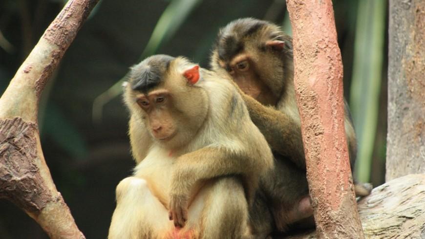 Под Харьковом на рабочего зоопарка напали обезьяны