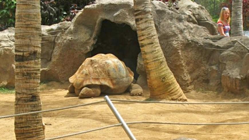 На испанский пляж выбросило 700-килограммовую черепаху