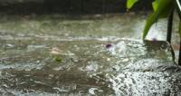 "Фото: Елена Андреева, ""«Мир 24»"":http://mir24.tv/, дождь"