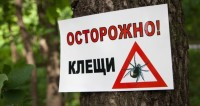 Нашествие клещей: от укусов пострадали более десяти тысяч россиян