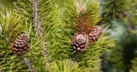 Неделя леса: члены Исполкома СНГ посадили под Минском березы и сосны