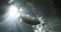 Воды Днестра вновь наполнятся рыбой