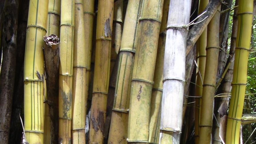 Бамбуковый электромотоцикл собрали на Филиппинах