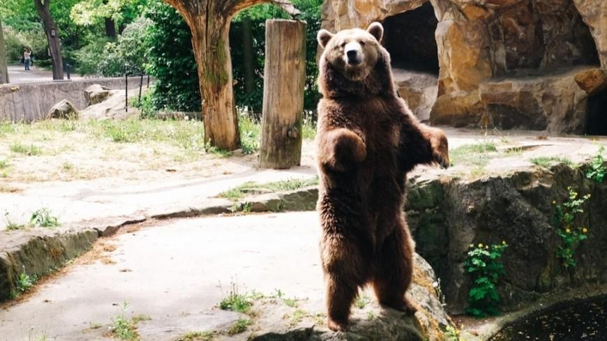 "© Фото: ""Елизавета Шагалова, «Мир 24»"":http://mir24.tv/, зоопарк, медведь"
