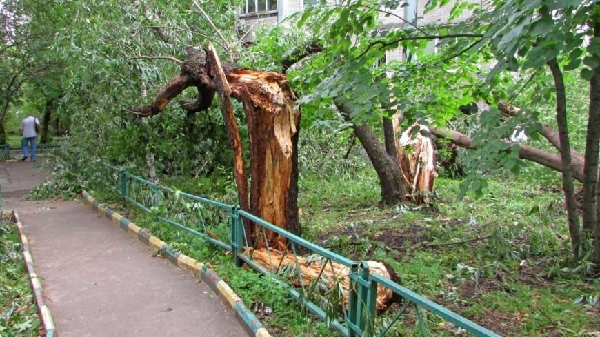 Ураган в Поволжье обесточил дома и повалил деревья
