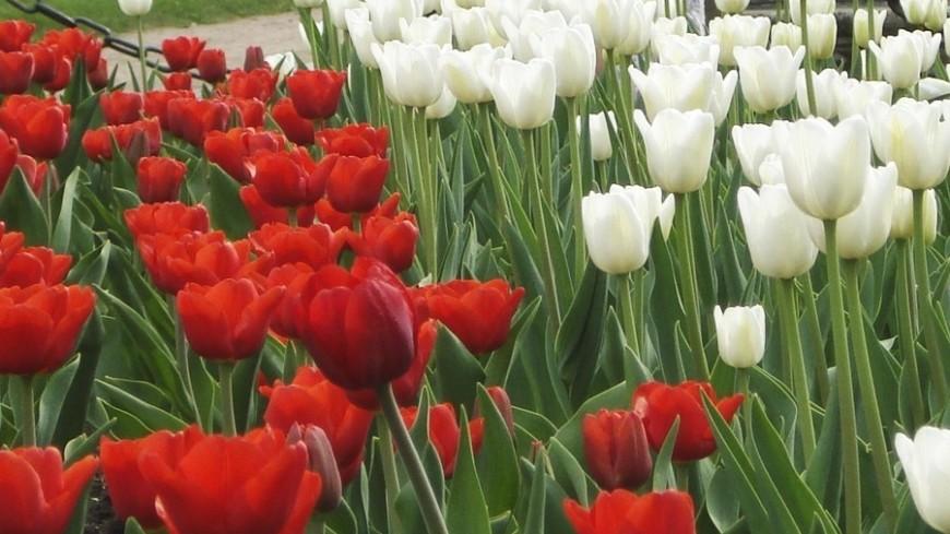 Цветники с логотипом мундиаля появятся в Москве