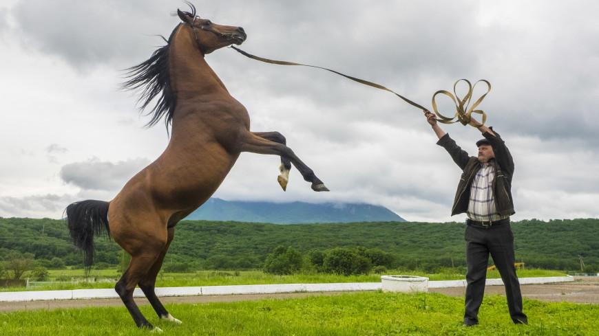 Праздник туркменского скакуна: в Ашхабаде выберут лучшего коня