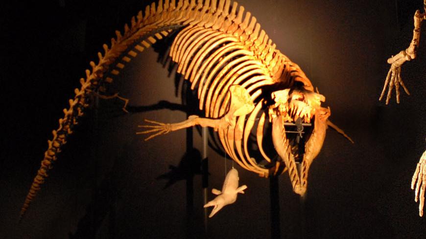 Ростовчанам показали редкого кита-археоцета