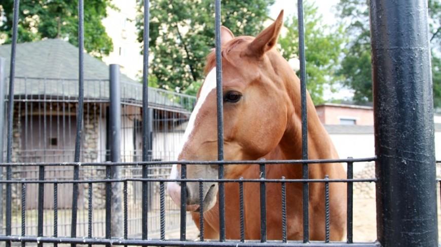 Врач человека: как лошади лечат особенных детей