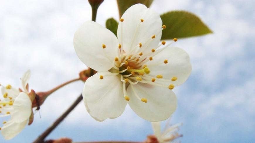 Найдено вещество, заставляющее растения расцветать