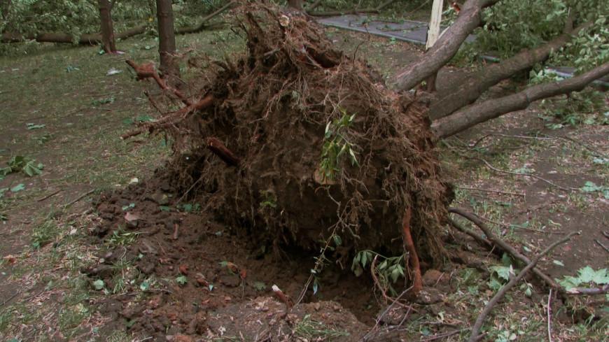 Собянин: Вторая волна урагана затронула в основном Новую Москву