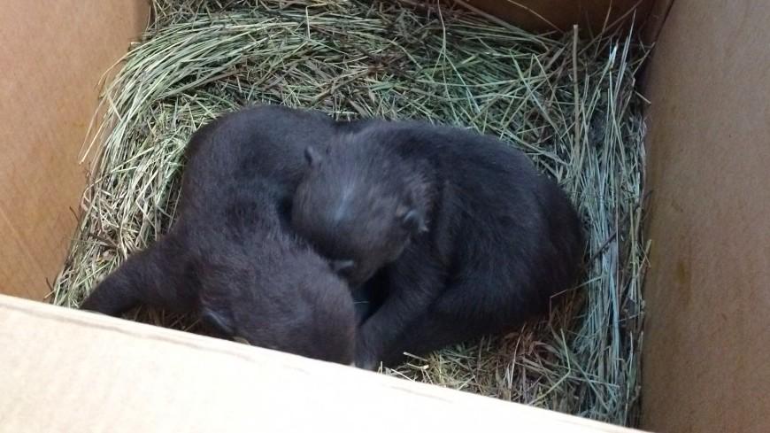 В Болгарии лесники спасли осиротевших медвежат