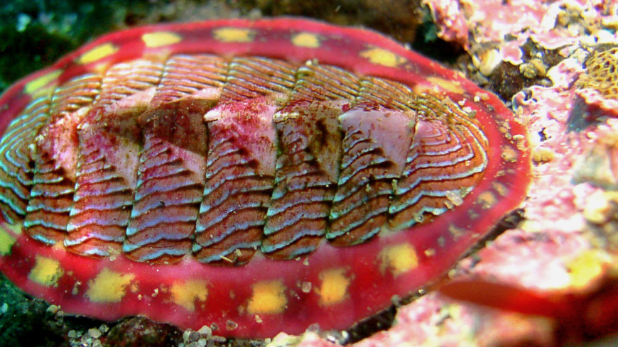 В Мексиканском заливе обнаружен необычный моллюск