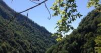 "© Фото: ""Светлана Родина, «МИР 24»"":http://mir24.tv/, природа, горы, лес"