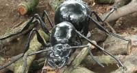 Муравей искусственный неестественных размеров, животные, насекомые, инсекты, муравьи, муравей