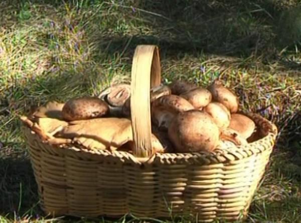 Правила безопасности для грибника этим летом