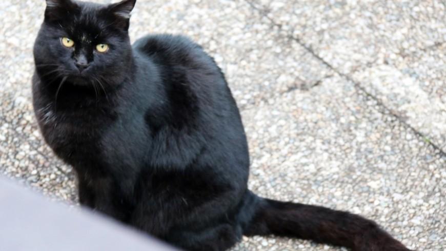 """Фото: Мария Чегляева, """"«МИР 24»"""":http://mir24.tv/, черная кошка, кот, кошка"""