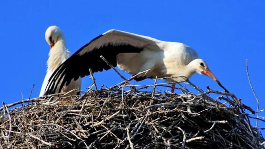 "Фото: Мария Чегляева (МТРК «Мир») ""«Мир 24»"":http://mir24.tv/, аисты, птица, птицы, аист"