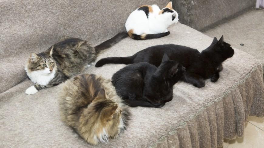 В Греции любителям котиков предложили работу мечты