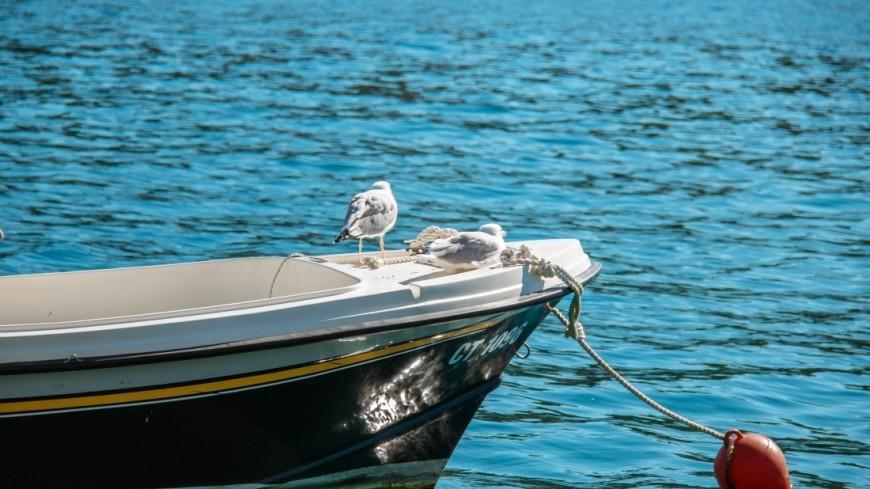 хорватия, адриатическое море, лодка, яхта, корабль, судно, птица, чайка