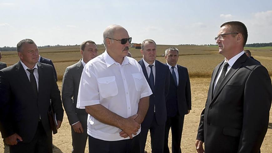 Лукашенко об урожае: Надо убрать все посевы до зернышка