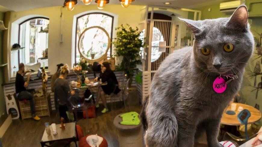 Без кота и жизнь не та, или Зачем москвичам котокафе