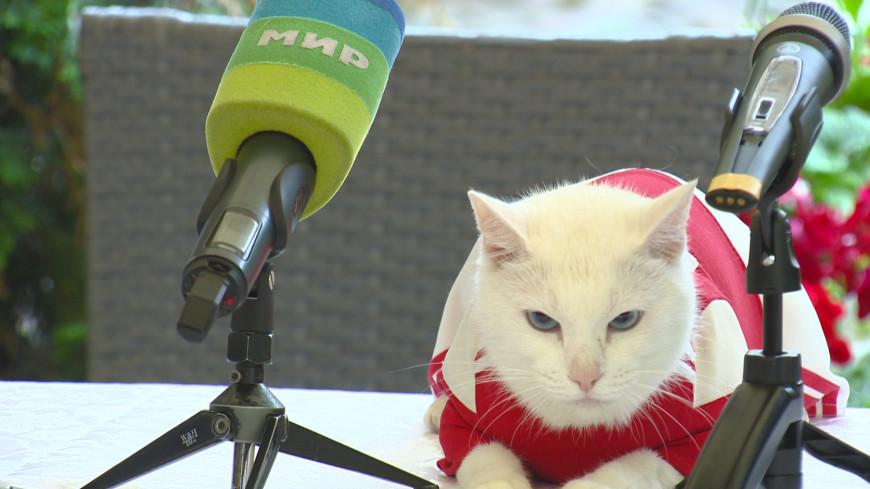 Карьера кота Ахилла