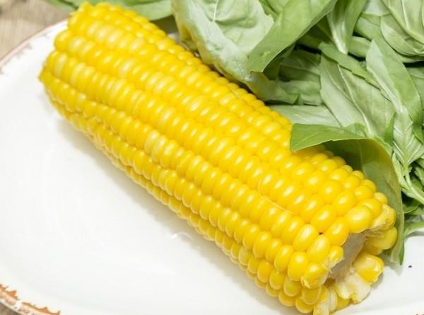 Древнейший вирус растений обнаружили в кукурузе