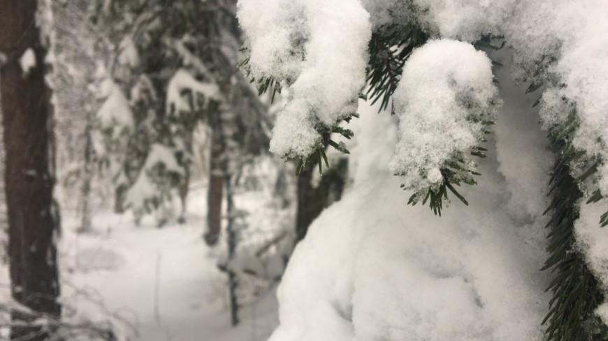 Тайны природы: когда образуются самые красивые снежинки