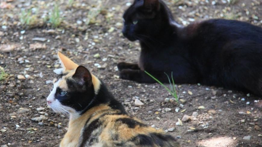 кот, кошка, кошки лежат