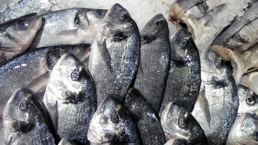 "Фото: Елизавета Шагалова, ""«МИР 24»"":http://mir24.tv/, дорадо, рыба"