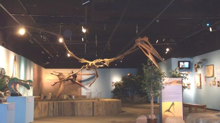 У птерозавров нашли пышное оперение