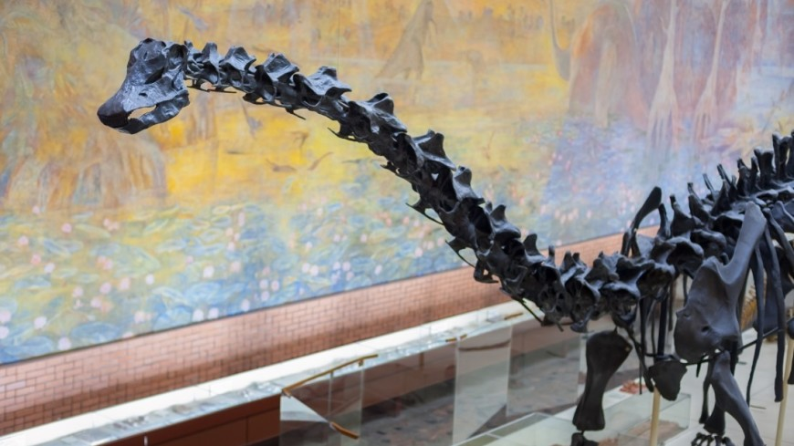 Палеонтологический музей им. Ю.А.Орлова,палеонтология, раскопки, эволюция, древность, палеонтологический музей,  динозавр, ,палеонтология, раскопки, эволюция, древность, палеонтологический музей,  динозавр,