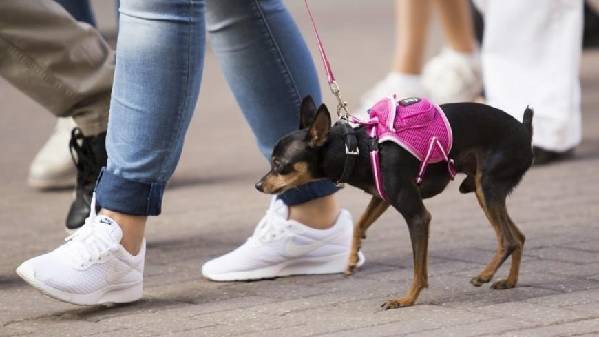 Девушка на прогулке со своей собачкой