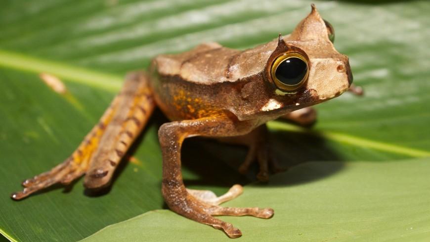 В Эквадоре заметили лягушек, считавшихся вымершими с 2005 года