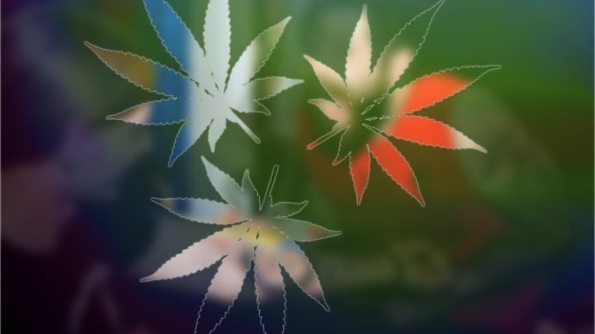 """Фото: Елена Андреева, """"«Мир 24»"""":http://mir24.tv/, марихуана, наркотики, анаша"""