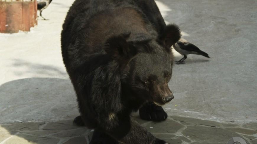 На Урале медведь залег в спячку у городской котельной (ВИДЕО)