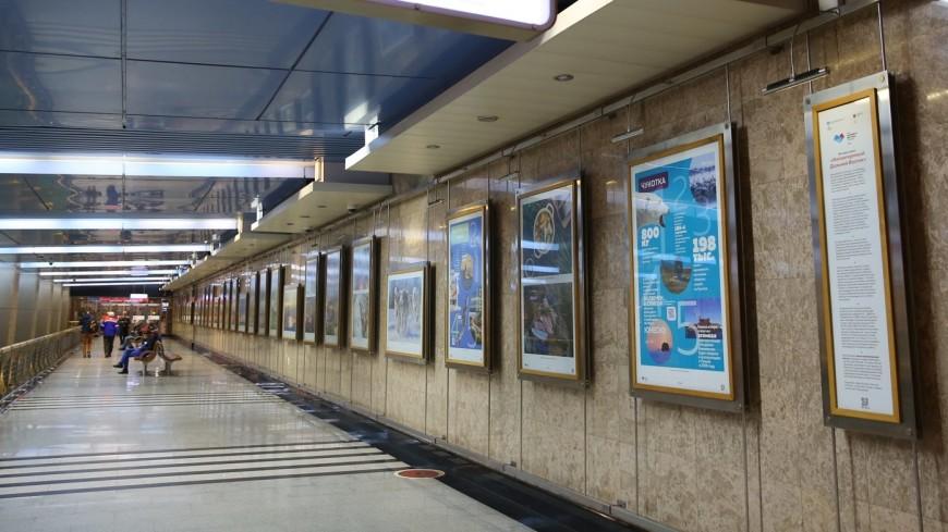 Тундра и северное сияние: пассажиров московского метро знакомят с Дальним Востоком