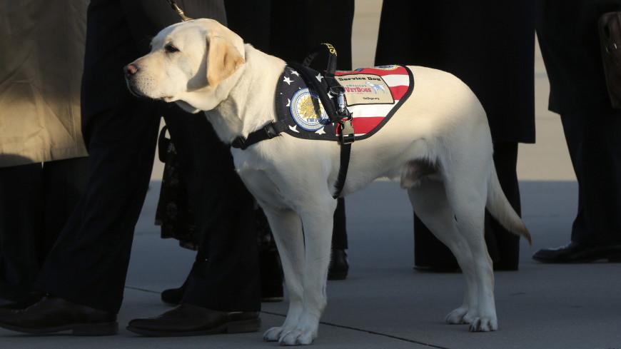 Собаке Буша-старшего нашли работу в госпитале для ветеранов