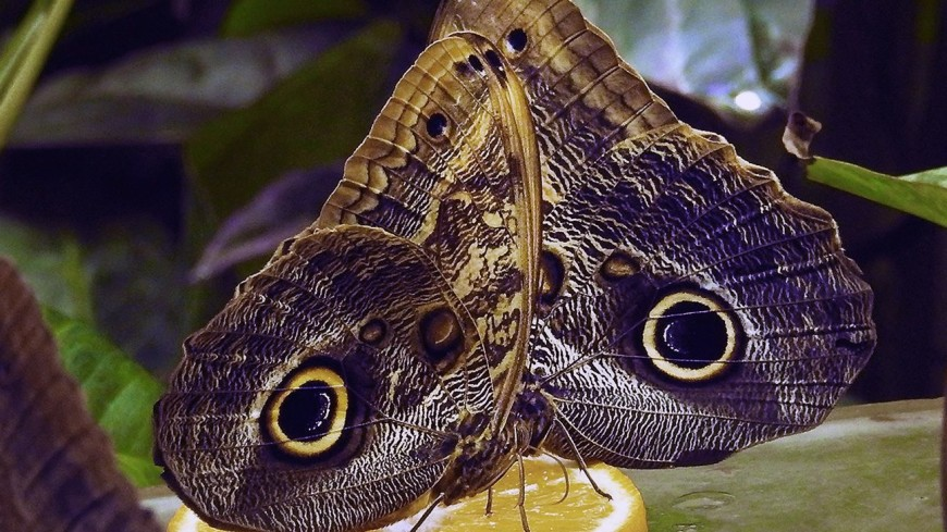 В Новый год в Московском зоопарке появится 365 тропических бабочек
