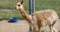 Московский зоопарк в честь Дня рождения организует бесплатные экскурсии