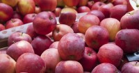 От яблок до чеснока: Китай начал поставки фруктов в Россию и Беларусь