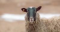 Перестрелка из-за овец в Нигерии унесла жизни почти 40 африканцев