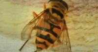 Австралийский художник создал для пчел искусственные цветы с пыльцой