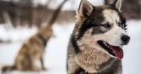 На одно лицо: британец случайно запустил всемирный «собачий» флешмоб