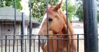 В истории возникновения лошади Пржевальского нашли неточность
