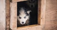 Неравнодушные вандалы разгромили приют в Мурманске и выпустили собак